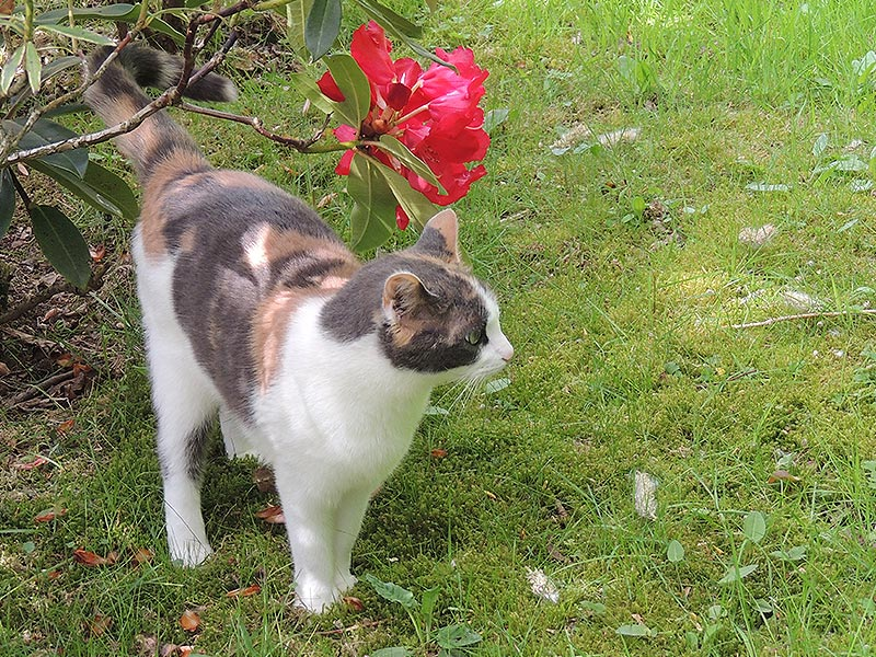 Notre chat 'Gaufrette' © Gite Les 3 Voiles