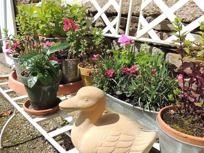 Le banc fleuri de notre cour © Gite Les 3 Voiles
