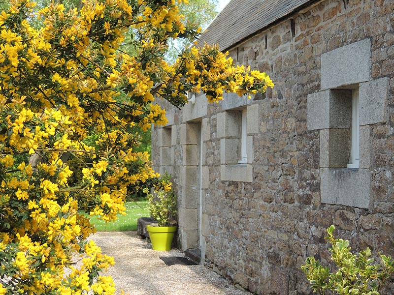 La façade du gîte et le genêt en fleurs © Gite Les 3 Voiles